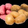 Potato - Select Variety